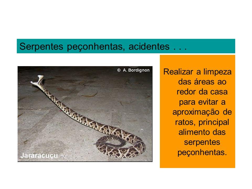 Serpentes peçonhentas, acidentes . . .
