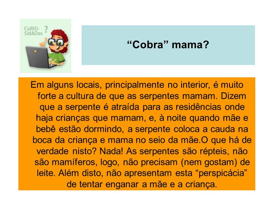 Cobra mama