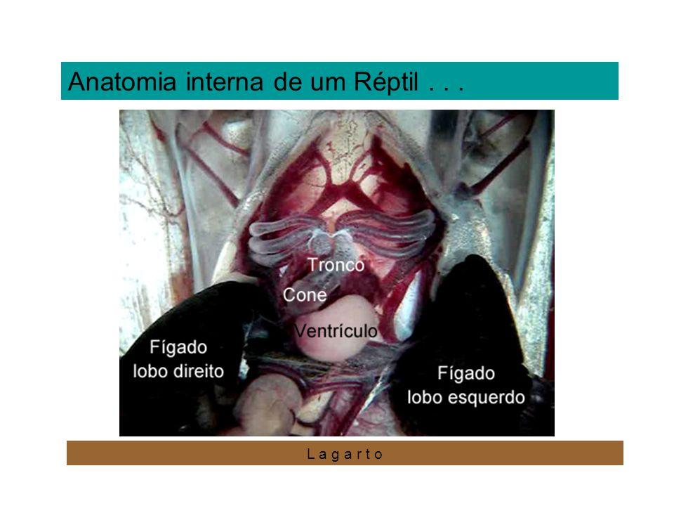 Anatomia interna de um Réptil . . .
