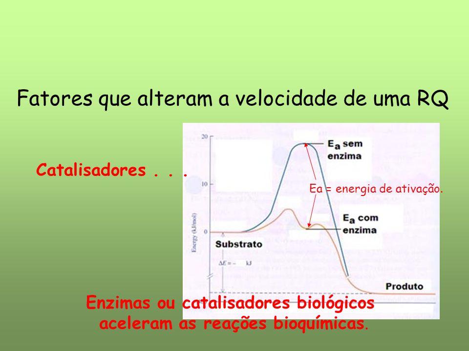 Enzimas ou catalisadores biológicos