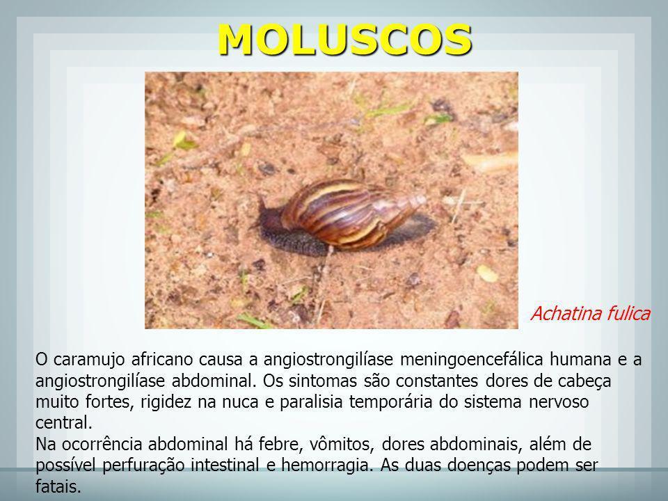 MOLUSCOS Achatina fulica