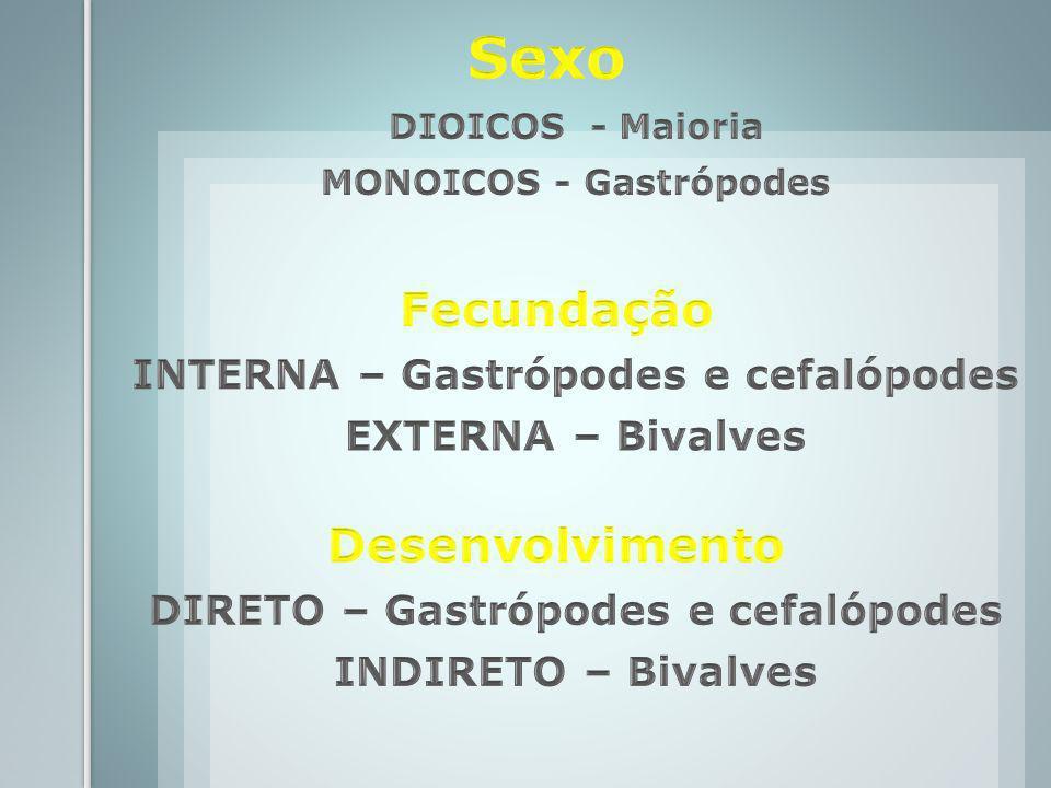 INTERNA – Gastrópodes e cefalópodes DIRETO – Gastrópodes e cefalópodes