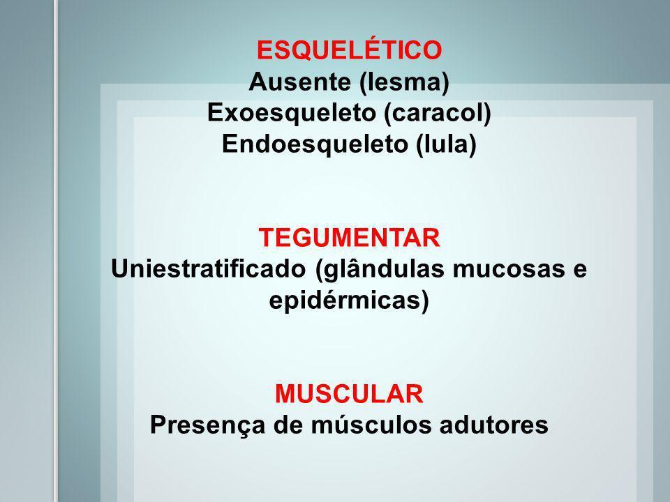 Exoesqueleto (caracol) Endoesqueleto (lula)