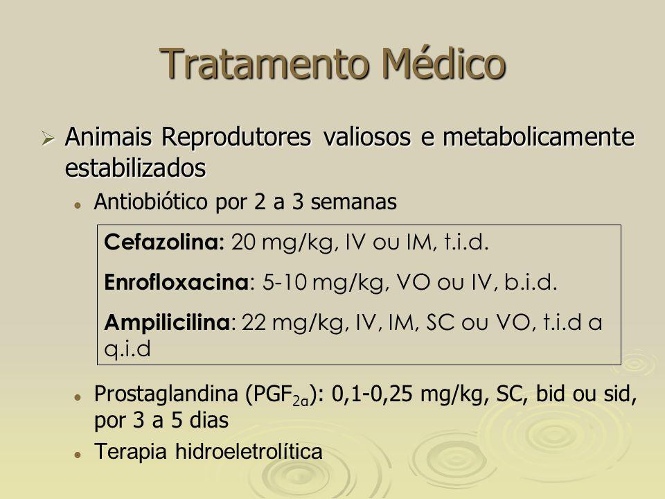 Tratamento Médico Animais Reprodutores valiosos e metabolicamente estabilizados. Antiobiótico por 2 a 3 semanas.