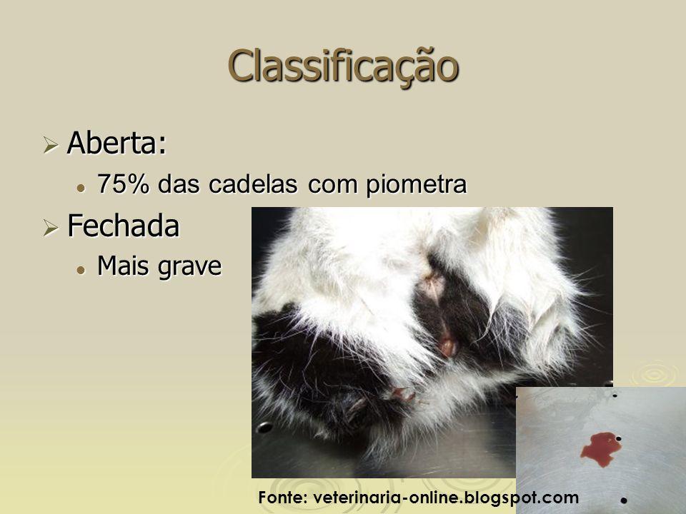 Classificação Aberta: Fechada 75% das cadelas com piometra Mais grave