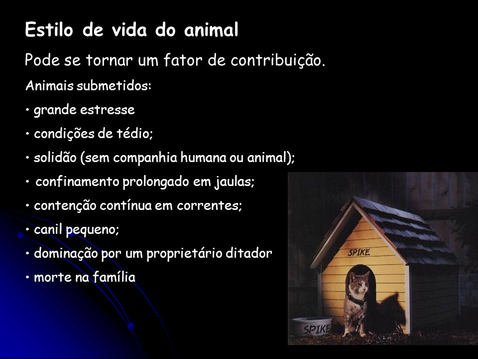 Estilo de vida do animal