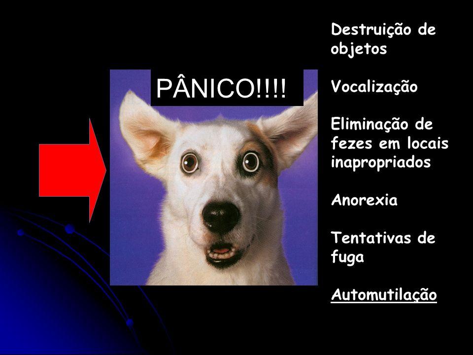 PÂNICO!!!! Destruição de objetos Vocalização