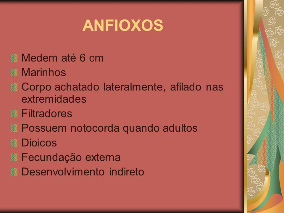 ANFIOXOS Medem até 6 cm Marinhos