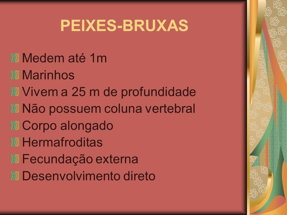 PEIXES-BRUXAS Medem até 1m Marinhos Vivem a 25 m de profundidade