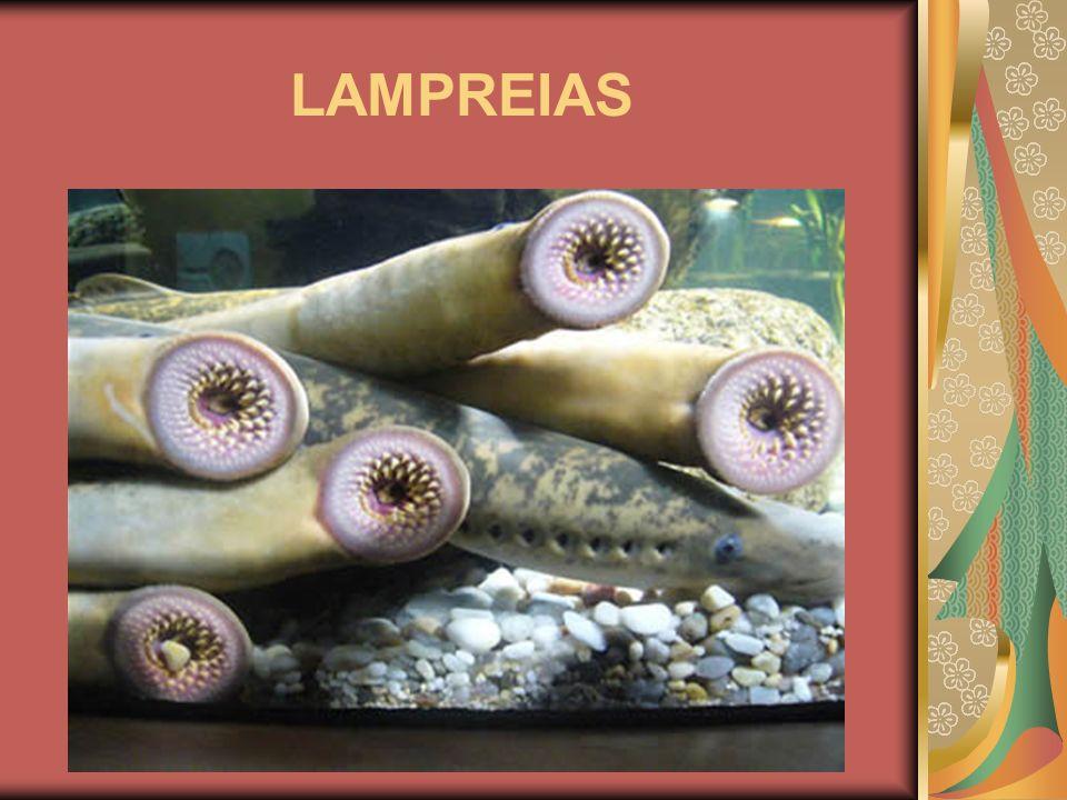 LAMPREIAS