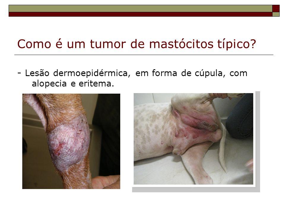 Como é um tumor de mastócitos típico
