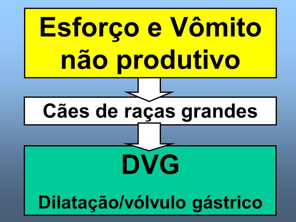 Esforço e Vômito não produtivo Dilatação/vólvulo gástrico