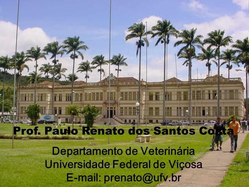 Prof. Paulo Renato dos Santos Costa