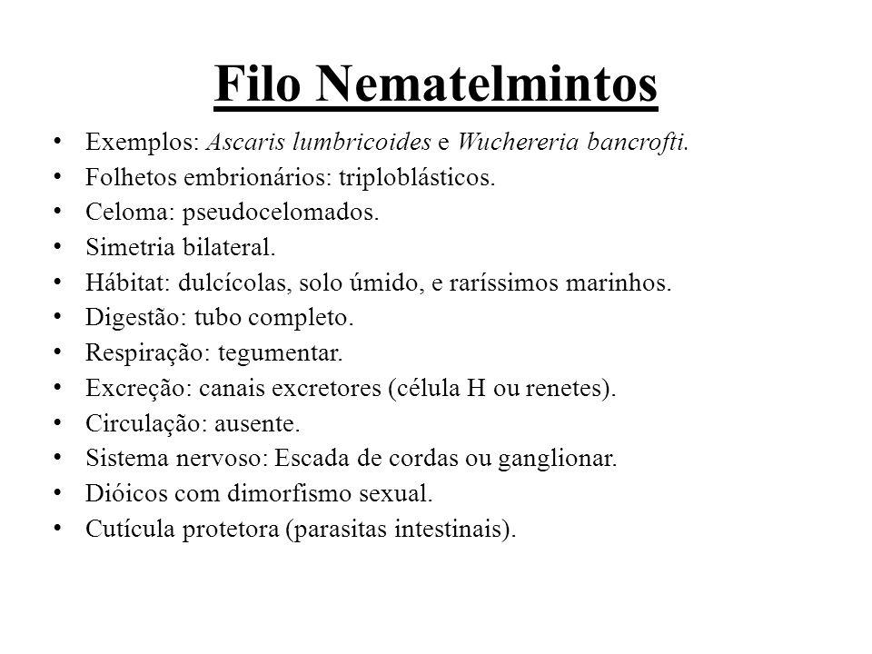 Filo Nematelmintos Exemplos: Ascaris lumbricoides e Wuchereria bancrofti. Folhetos embrionários: triploblásticos.