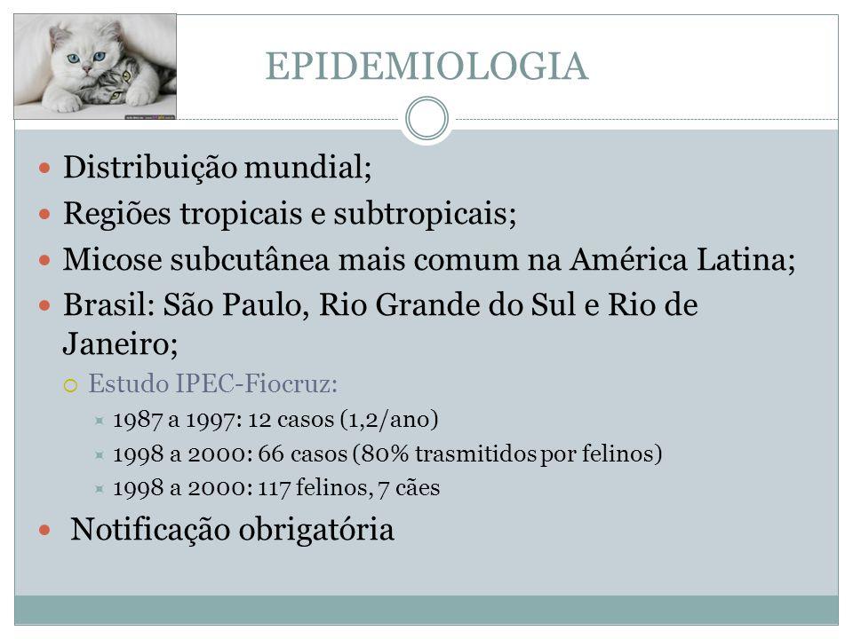 EPIDEMIOLOGIA Distribuição mundial; Regiões tropicais e subtropicais;