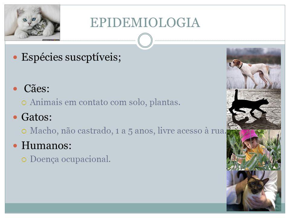 EPIDEMIOLOGIA Espécies suscptíveis; Cães: Gatos: Humanos: