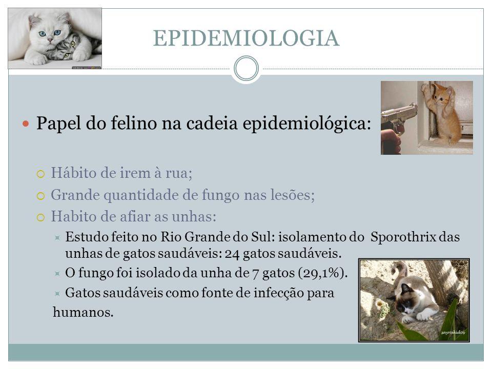 EPIDEMIOLOGIA Papel do felino na cadeia epidemiológica: