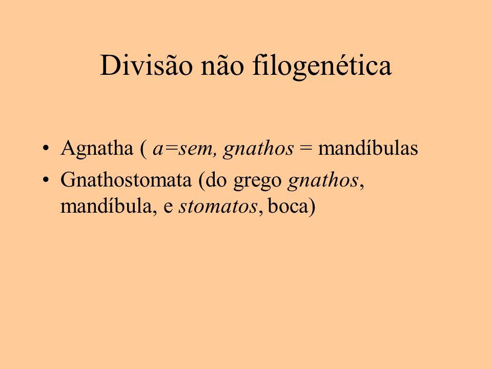 Divisão não filogenética