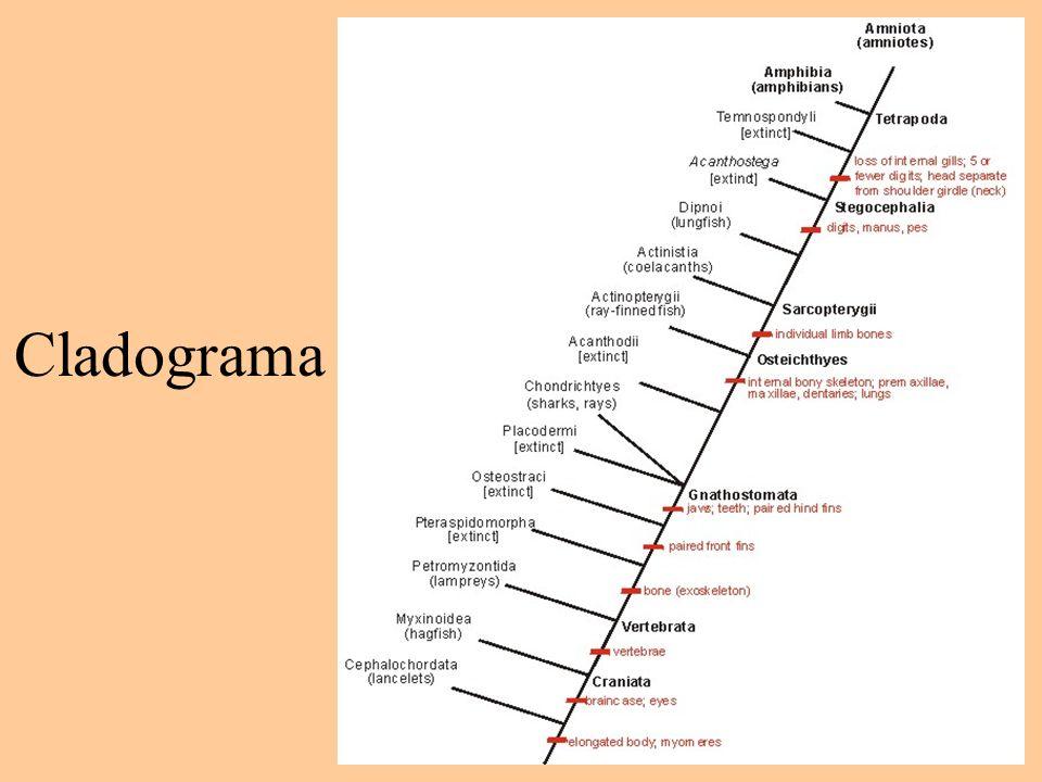 Cladograma