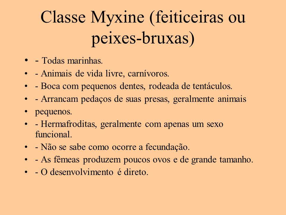 Classe Myxine (feiticeiras ou peixes-bruxas)