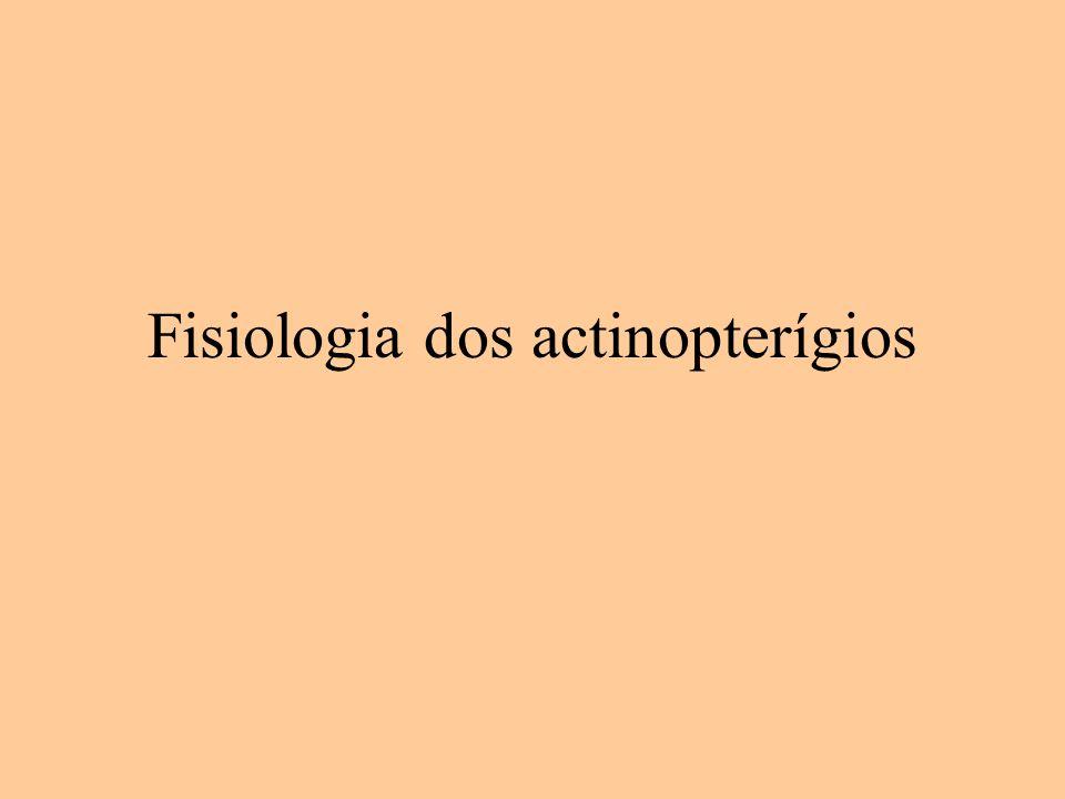 Fisiologia dos actinopterígios