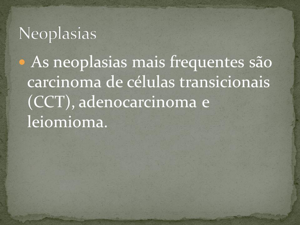Neoplasias As neoplasias mais frequentes são carcinoma de células transicionais (CCT), adenocarcinoma e leiomioma.