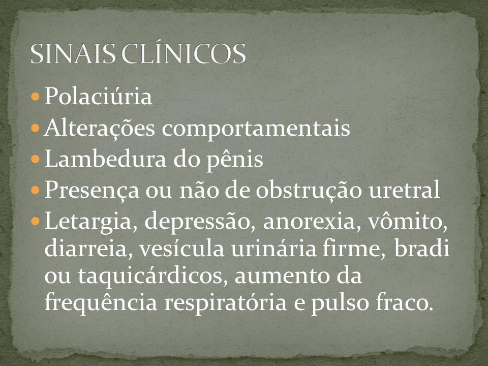 SINAIS CLÍNICOS Polaciúria Alterações comportamentais