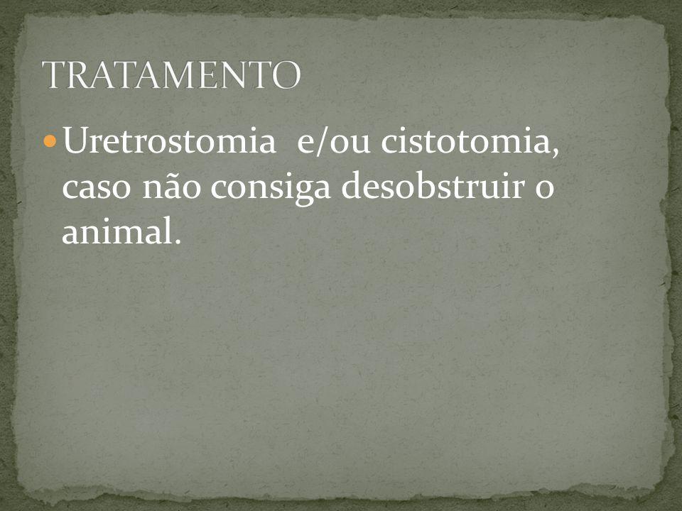 TRATAMENTO Uretrostomia e/ou cistotomia, caso não consiga desobstruir o animal.