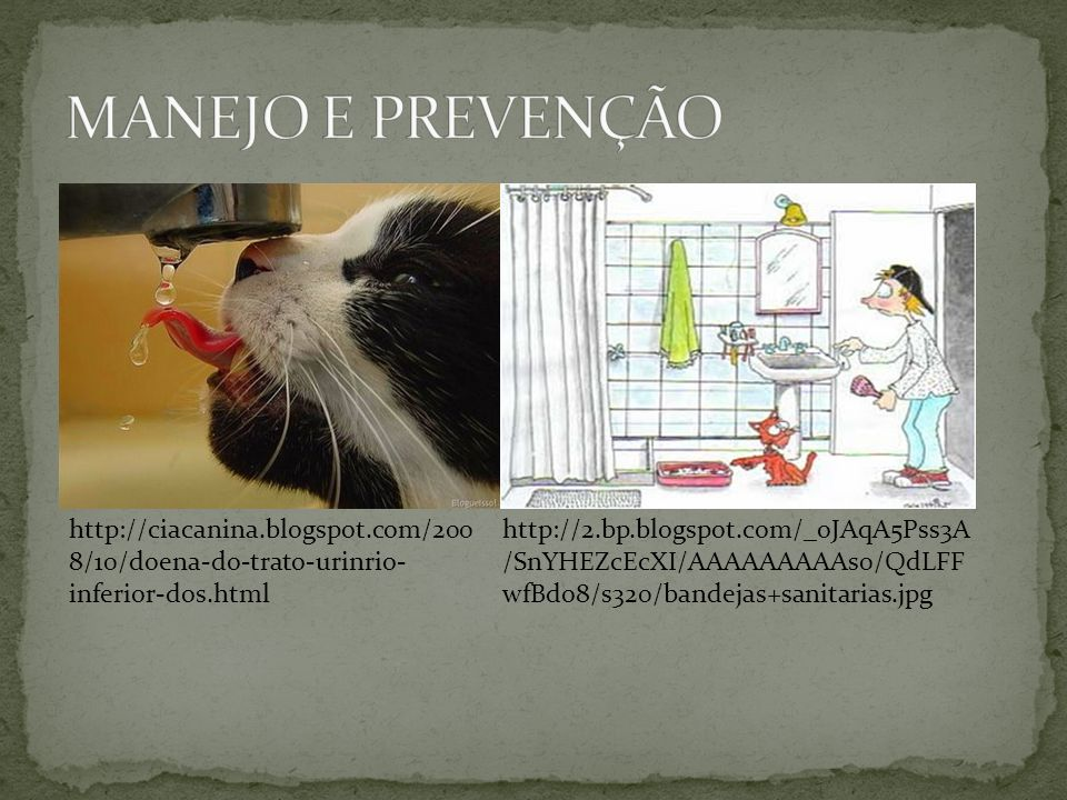 MANEJO E PREVENÇÃO http://ciacanina.blogspot.com/2008/10/doena-do-trato-urinrio-inferior-dos.html.