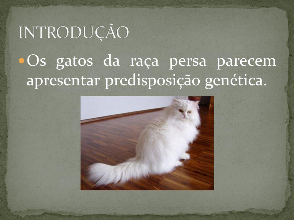 INTRODUÇÃO Os gatos da raça persa parecem apresentar predisposição genética.