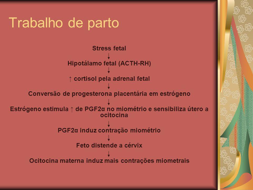 Trabalho de parto Stress fetal Hipotálamo fetal (ACTH-RH)
