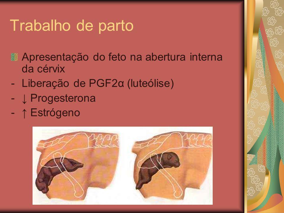 Trabalho de parto Apresentação do feto na abertura interna da cérvix