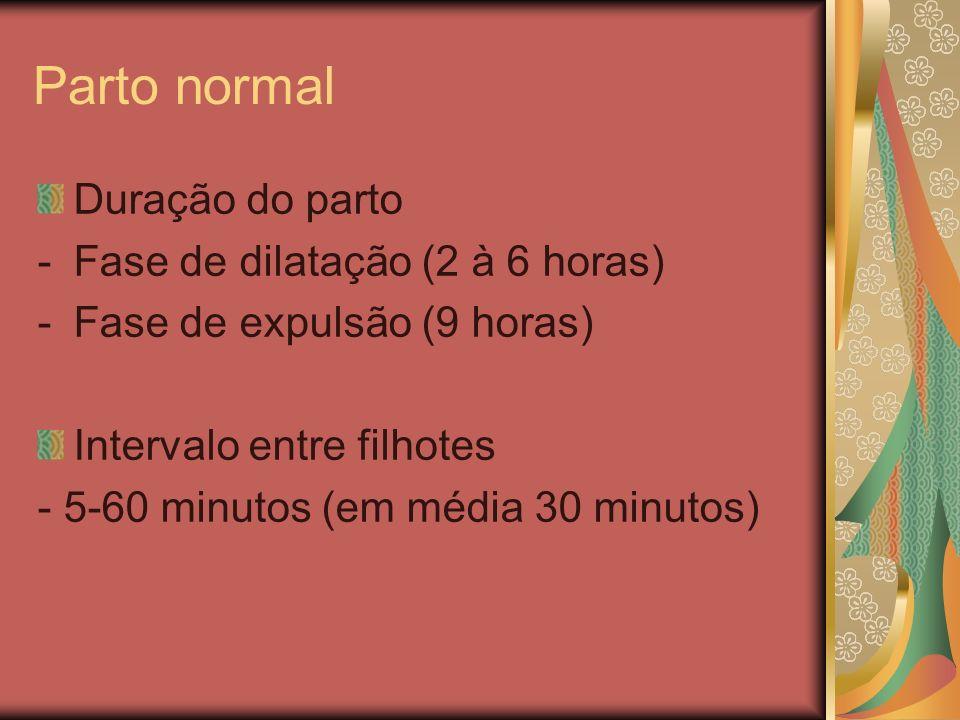 Parto normal Duração do parto Fase de dilatação (2 à 6 horas)
