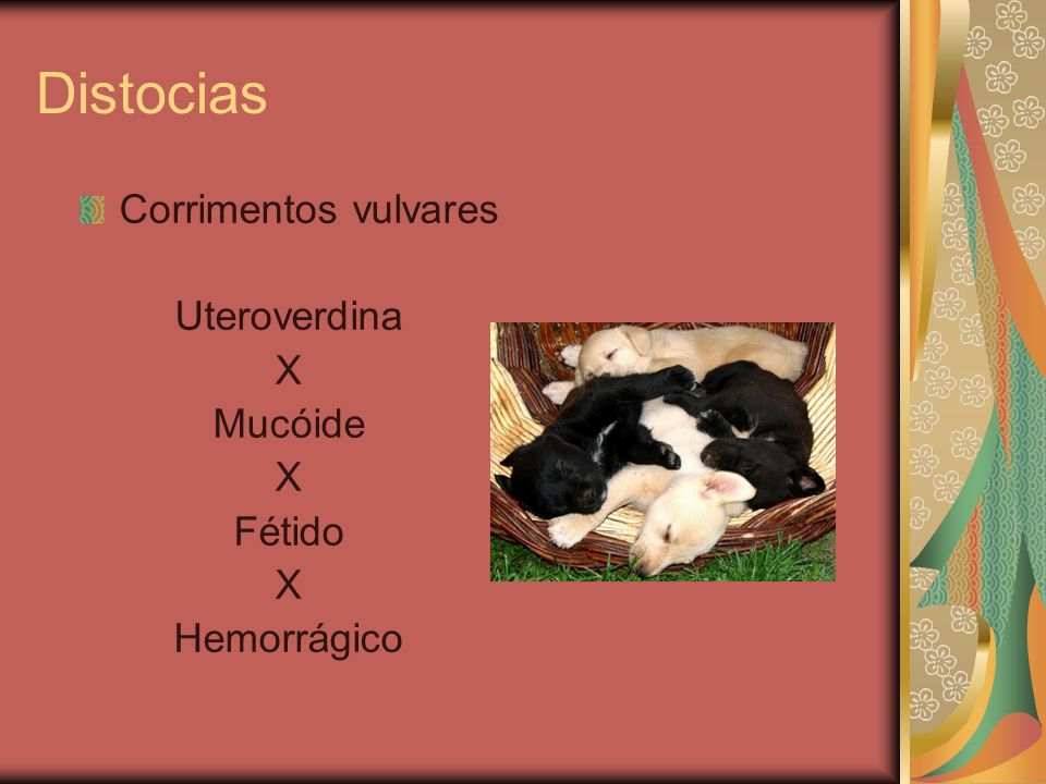 Distocias Corrimentos vulvares Uteroverdina X Mucóide Fétido