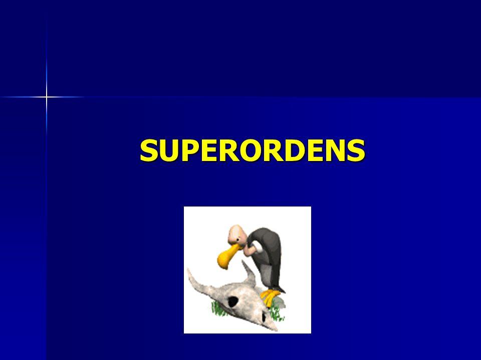 SUPERORDENS