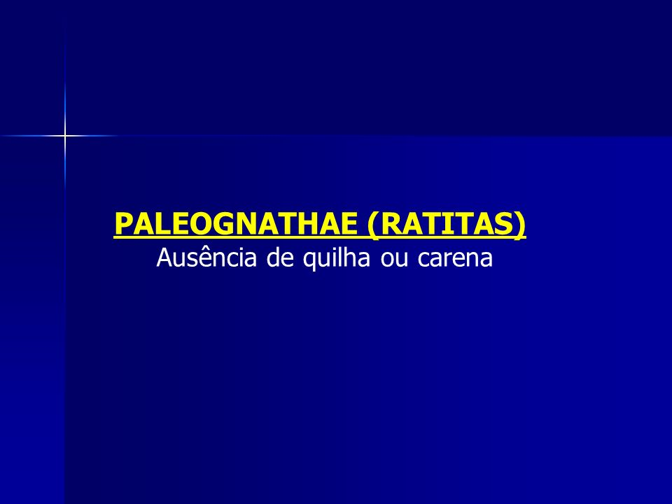 PALEOGNATHAE (RATITAS)