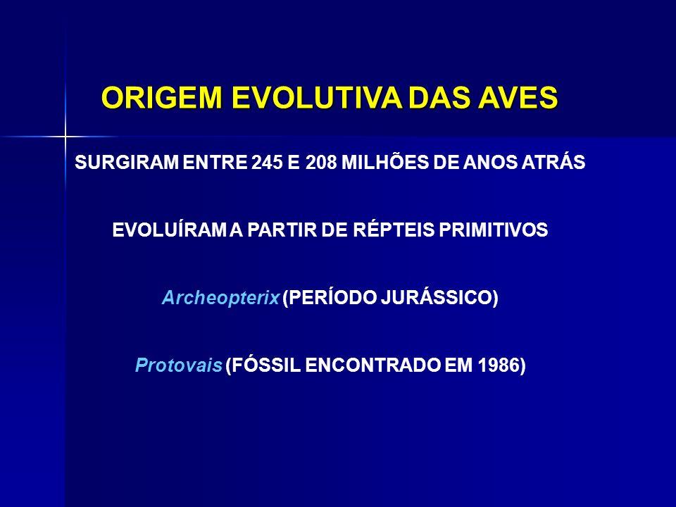 ORIGEM EVOLUTIVA DAS AVES