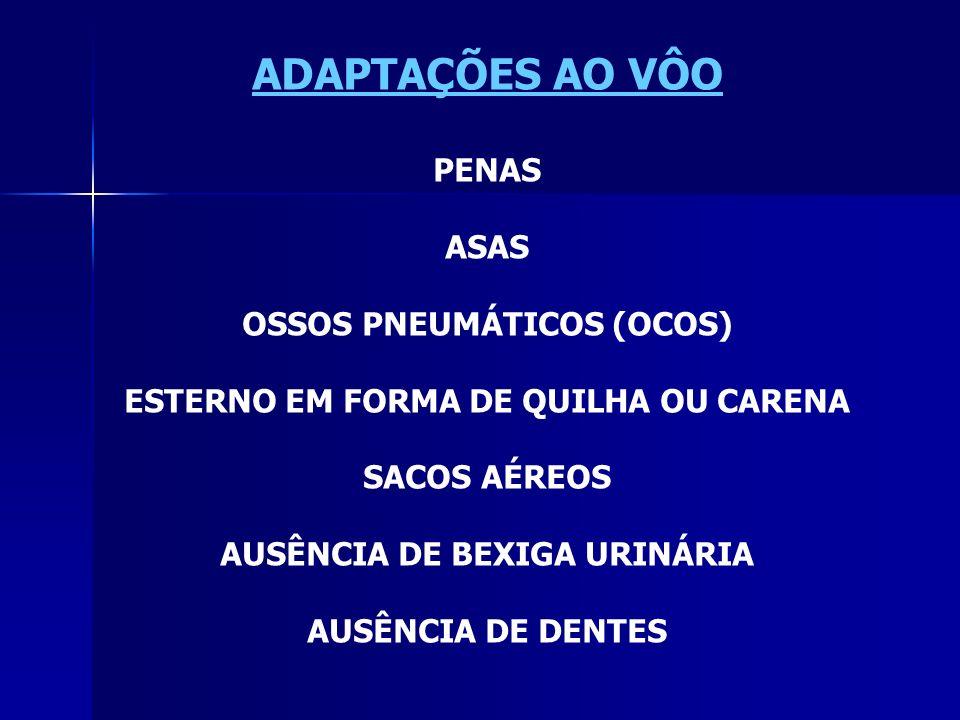 ADAPTAÇÕES AO VÔO PENAS ASAS OSSOS PNEUMÁTICOS (OCOS)