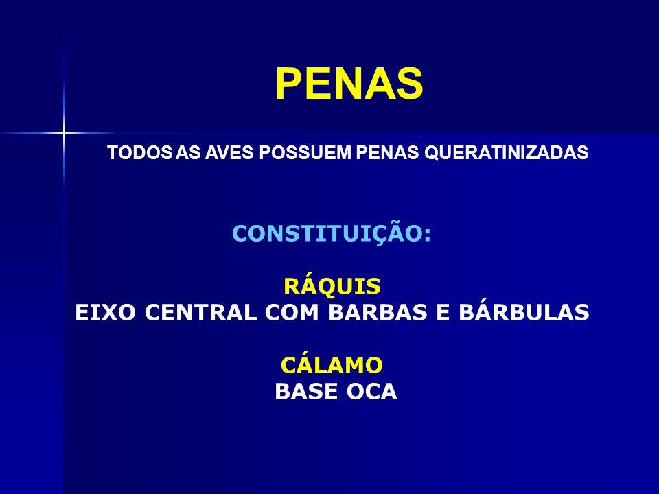 PENAS CONSTITUIÇÃO: RÁQUIS EIXO CENTRAL COM BARBAS E BÁRBULAS CÁLAMO