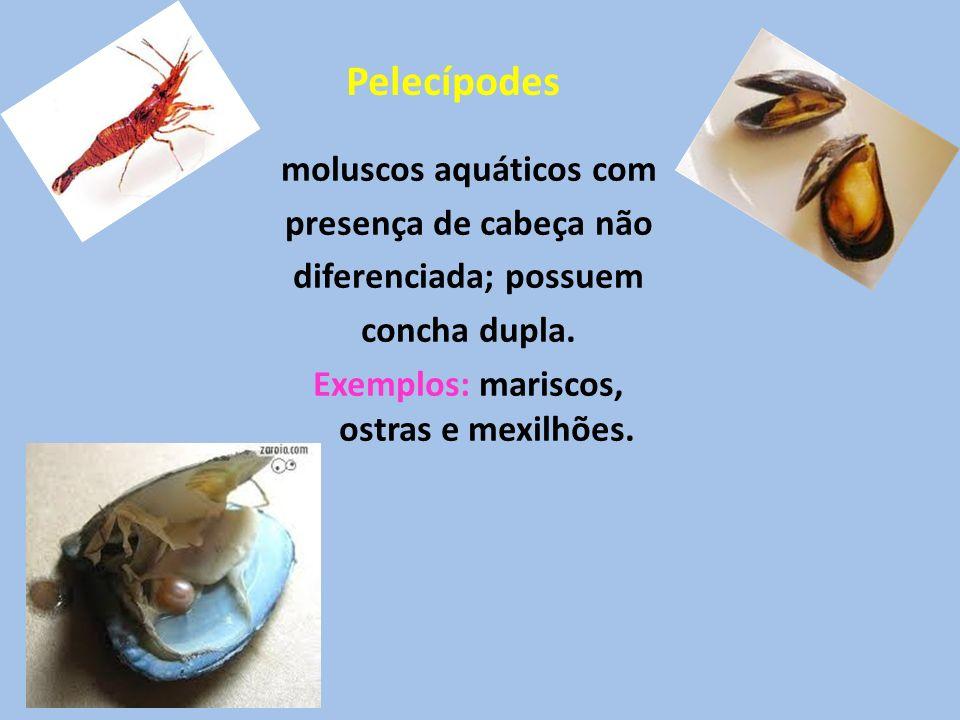 Pelecípodes moluscos aquáticos com presença de cabeça não diferenciada; possuem concha dupla.