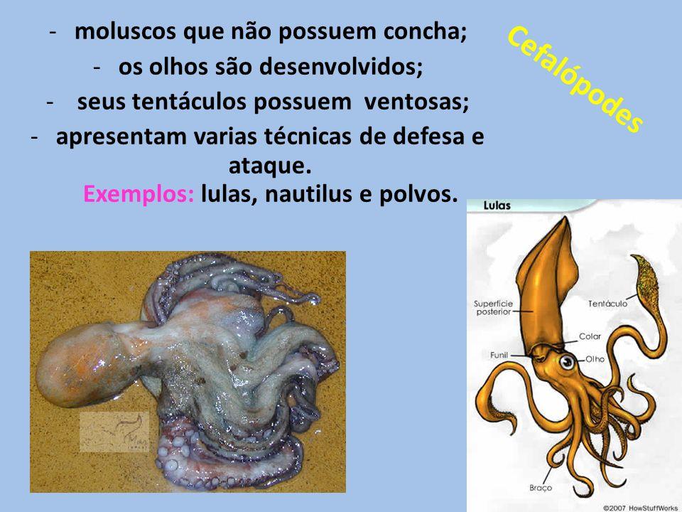 Cefalópodes moluscos que não possuem concha;