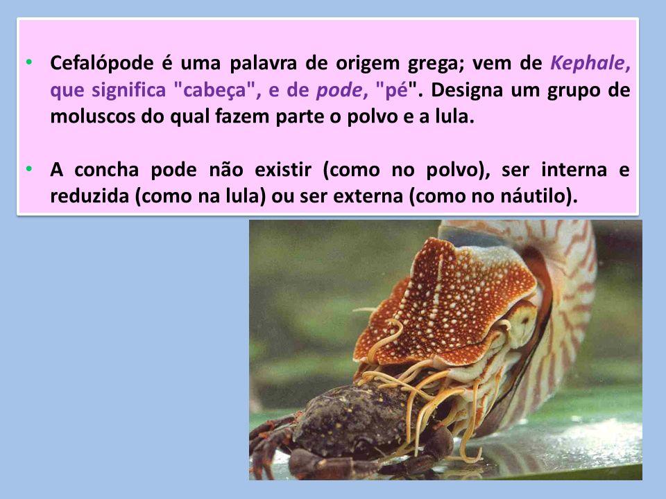 Cefalópode é uma palavra de origem grega; vem de Kephale, que significa cabeça , e de pode, pé . Designa um grupo de moluscos do qual fazem parte o polvo e a lula.