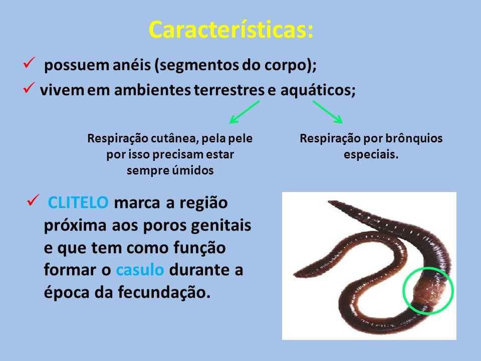 Características: possuem anéis (segmentos do corpo); vivem em ambientes terrestres e aquáticos;