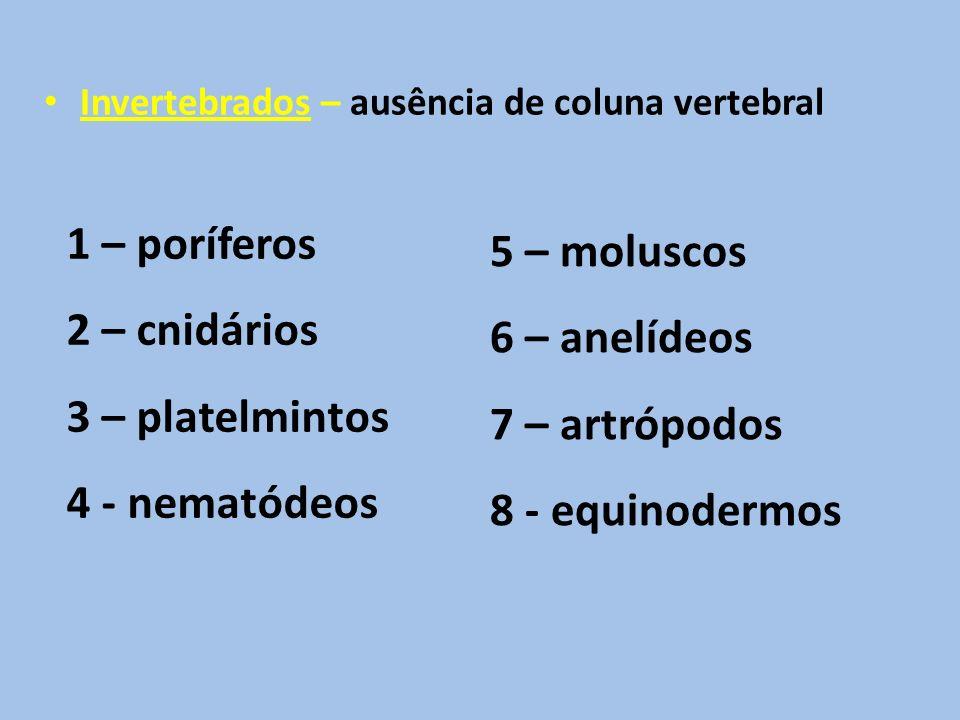 1 – poríferos 5 – moluscos 2 – cnidários 6 – anelídeos