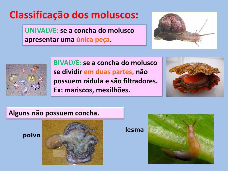 Classificação dos moluscos: