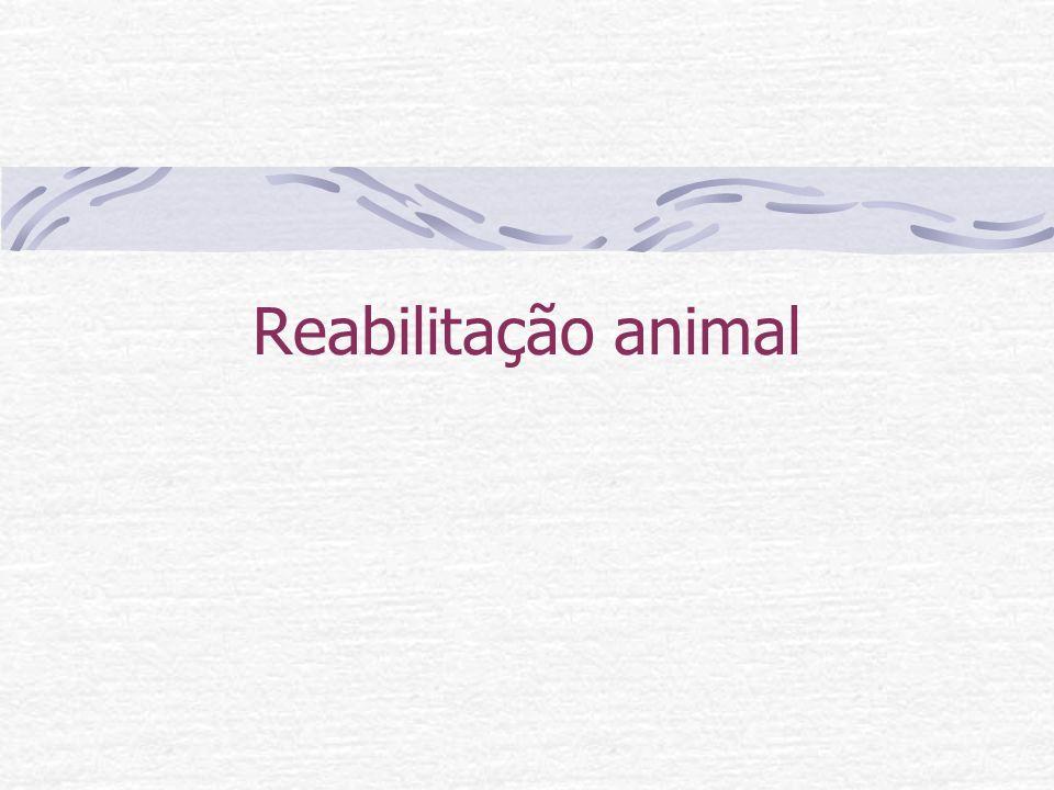 Reabilitação animal