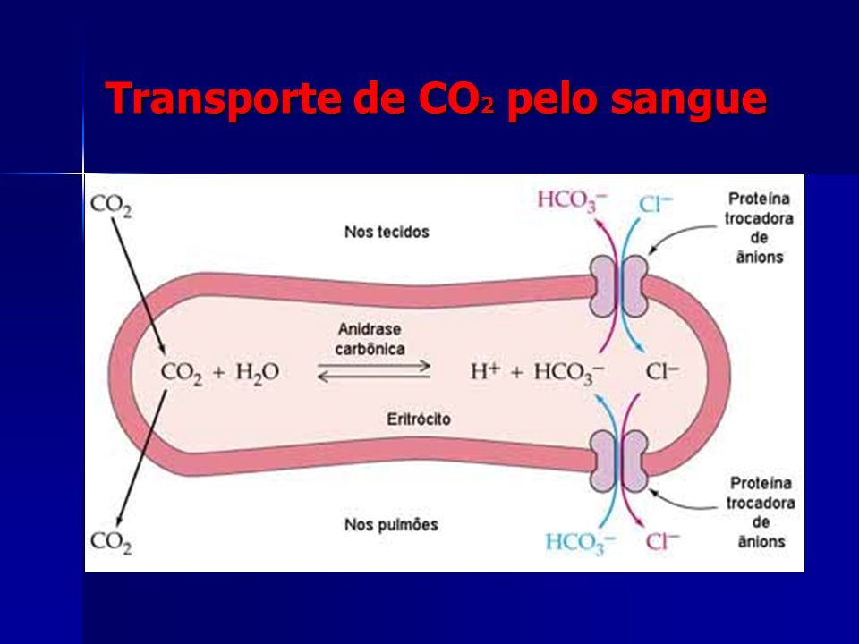 Transporte de CO2 pelo sangue