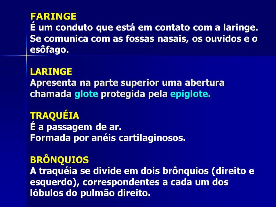 FARINGE É um conduto que está em contato com a laringe. Se comunica com as fossas nasais, os ouvidos e o esôfago.