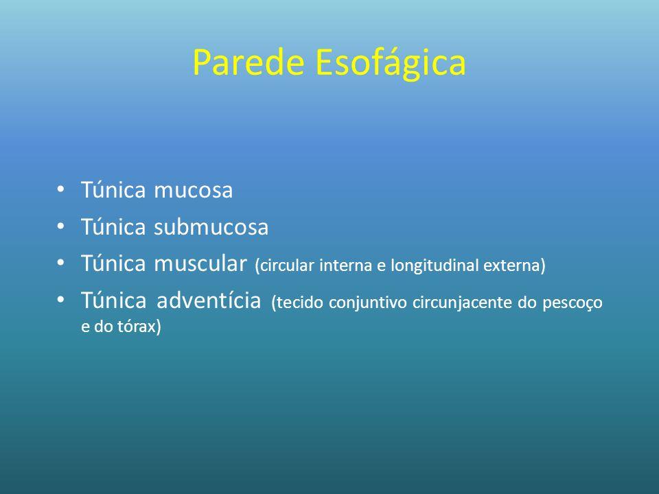 Parede Esofágica Túnica mucosa Túnica submucosa