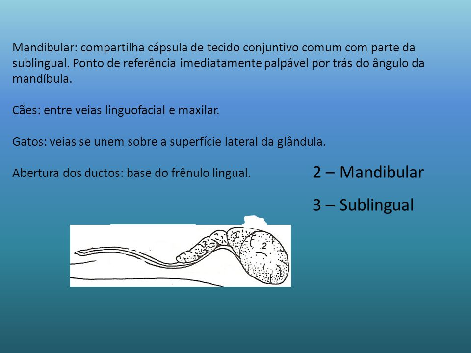2 – Mandibular 3 – Sublingual